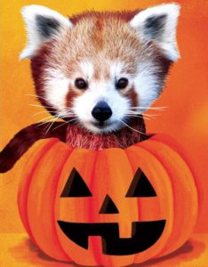 Spooktacular at Zoo Boise @ Zoo Boise